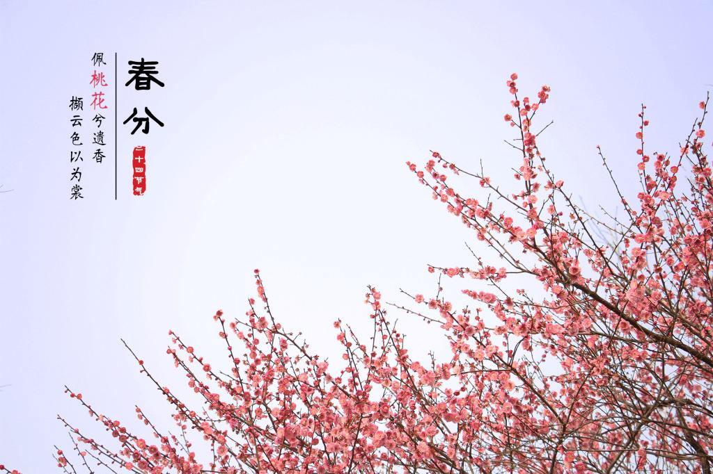 今日春分:惠风和畅,纸鸢自翻飞